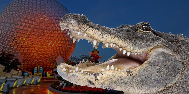 disney-world-alligator-attack_1_650x
